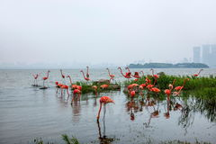 Escultura da cidade do lago Suzhou Jinji --- Flamingo Fotos de Stock
