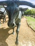 Escultura da movimentação do gado, Dallas Imagens de Stock