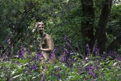 Escultura da ninfa entre plantas da alfazema na flor Foto de Stock Royalty Free