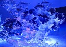 Escultura de gelo dos peixes, iluminada na noite no parque da confederação, Ottawa Fotografia de Stock Royalty Free