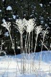Escultura de hielo en las plantas Foto de archivo libre de regalías