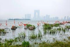 Escultura de la ciudad del lago suzhou Jinji --- Flamenco Imagenes de archivo