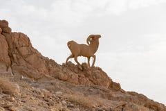 Escultura de uma cabra de montanha na montanha de atlas imagens de stock