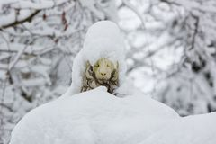 Escultura de un león cubierto con nieve Foto de archivo