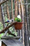 Escultura de un pájaro en un árbol - ajardine el diseño y el paisaje de Fotos de archivo
