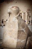 Escultura do horus de Eagle no templo de Hatshepsut luxor Egito imagens de stock