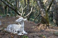Escultura dos cervos Imagens de Stock Royalty Free