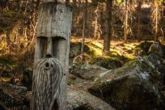 Escultura em uma árvore Trajeto rochoso em uma luz solar delicada da floresta escura entre as árvores fotografia de stock royalty free