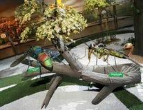 Escultura gigante del insecto en el parque Jaime Duque imagen de archivo
