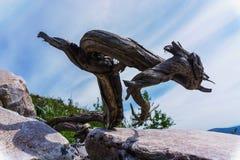 Escultura lunática ainda da vida natural da árvore Imagens de Stock Royalty Free