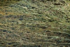 Escumalha de lagoa 3 Fotografia de Stock