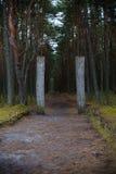 Escupida de Curonian Entrada al bosque del baile Imágenes de archivo libres de regalías