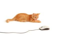 Escupidas del gatito al ratón del ordenador Imagenes de archivo