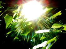 Escuridão na luz Imagem de Stock