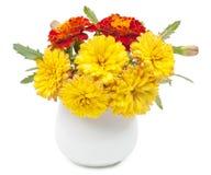 Escuro - as flores vermelhas dos cravos-de-defunto e o verão pequeno amarelam o crisântemo Fotografia de Stock