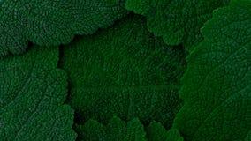 Escuro - folhas do verde feche acima de 4k filme