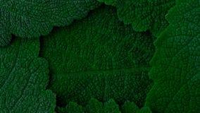 Escuro - folhas do verde Fundo do logotipo feche acima de 4k video estoque
