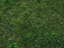 Escuro - grama verde Foto de Stock Royalty Free