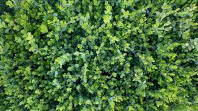 Escuro - grama verde, natureza bonita, a figura de cima de foto de stock