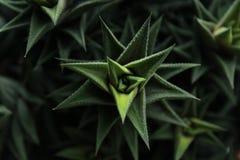 Escuro - macro da planta verde fotografia de stock royalty free