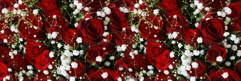 Escuro natural - Ruby Roses Background Wallpaper vermelho imagem de stock royalty free