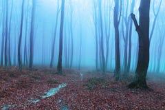 Escuro - névoa azul na floresta Imagens de Stock Royalty Free