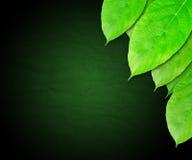 Escuro - o verde deixa o fundo Fotografia de Stock