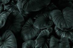 Escuro - teste padrão verde da folha no tom preto foto de stock royalty free