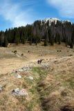 Escursione dei contrassegni sugli alpinisti del gruppo e della pietra Fotografia Stock
