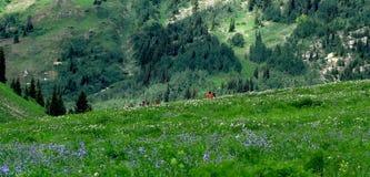 Escursione del bacino di Allbion fotografie stock