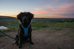 Escursione del cane al tramonto Fotografia Stock