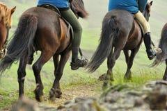 Escursione del cavallo in Islanda Immagini Stock