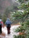 Escursione del paesaggio dopo la pioggia Fotografie Stock