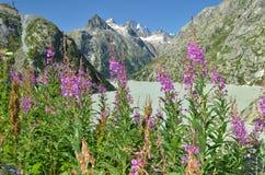 Escursione del percorso nelle alpi di Julian Immagini Stock Libere da Diritti