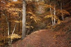 Escursione del percorso vicino a Diemelsee Immagine Stock Libera da Diritti