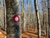 Escursione del segno sull'albero Fotografie Stock Libere da Diritti