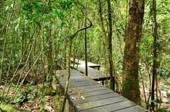 Escursione del viaggio attraverso una foresta Fotografie Stock