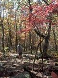 Escursione di caduta e l'albero riccio Fotografia Stock
