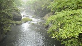 Esdoorn en rivier stock video