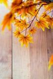 Esdoorn op houten achtergrond royalty-vrije stock foto's