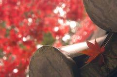Esdoornblad in Kyoto, Japan stock foto's