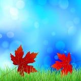 Esdoornblad op het groene gras vector illustratie