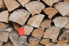 Esdoornblad in woodpile Stock Foto
