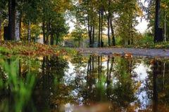 Esdoornbladeren en bezinningen in vulklei in de herfstpark stock foto's