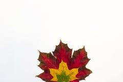 Esdoornbladeren en kastanjes op een witte achtergrond royalty-vrije illustratie