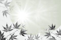 Esdoornbladeren en stralen van hoop, sympathie achtergrondontwerp Stock Afbeelding