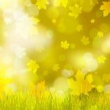 Esdoornbladeren, geel gras, achtergrond bokeh royalty-vrije stock fotografie