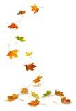 Esdoornbladeren het vallen Stock Fotografie