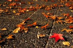 Esdoornbladeren op concrete vloer Stock Foto's