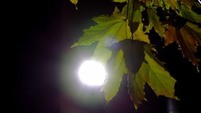 Esdoornbladeren op de achterstraatlantaarn stock videobeelden